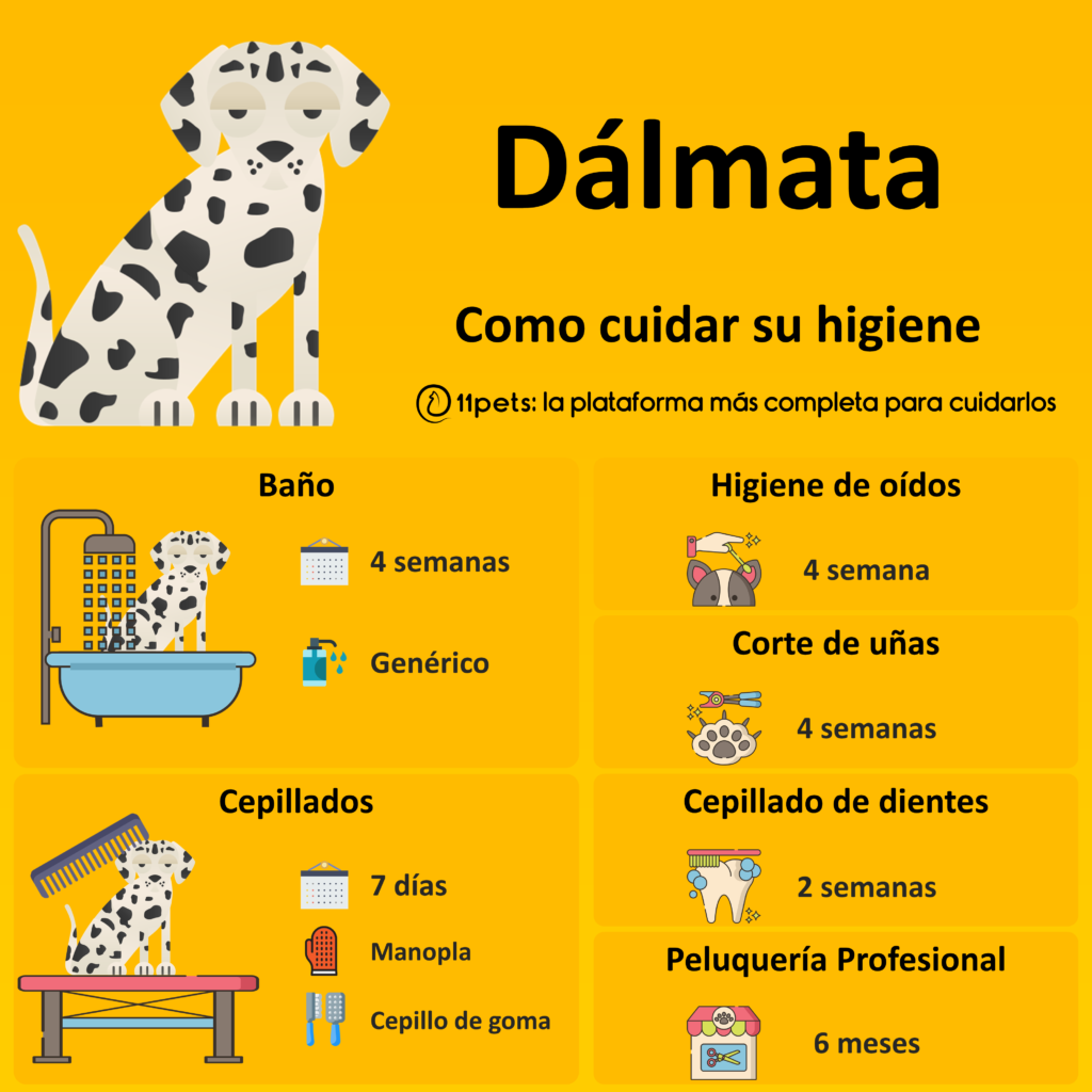 Guía de cuidados para la higiene de tu Dálmata