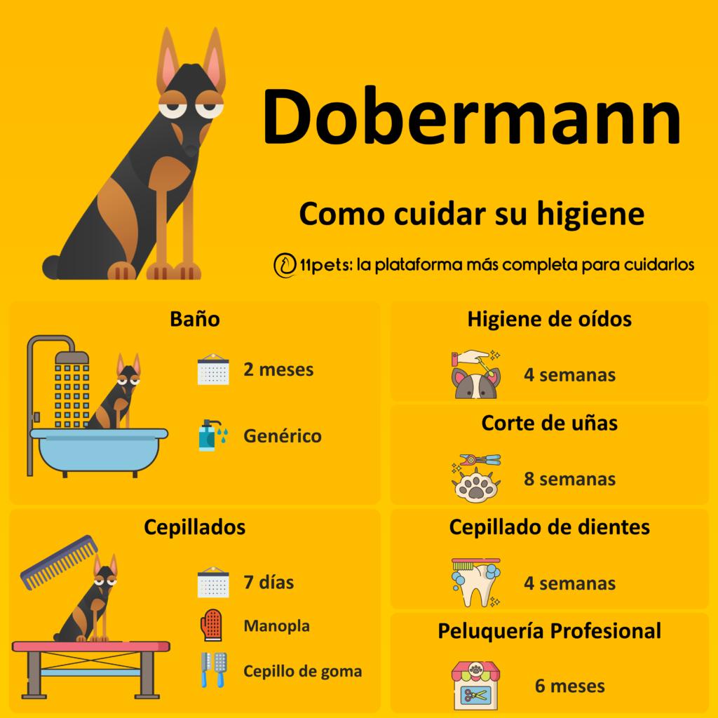 Guía de cuidados para la higiene de tu Dobermann