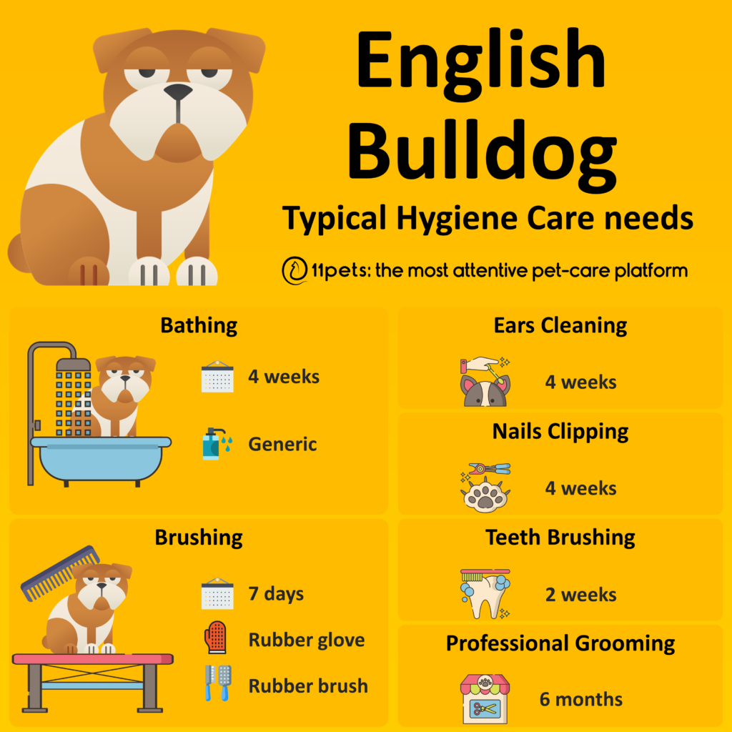 Hygiene Care Guide for English Bulldog