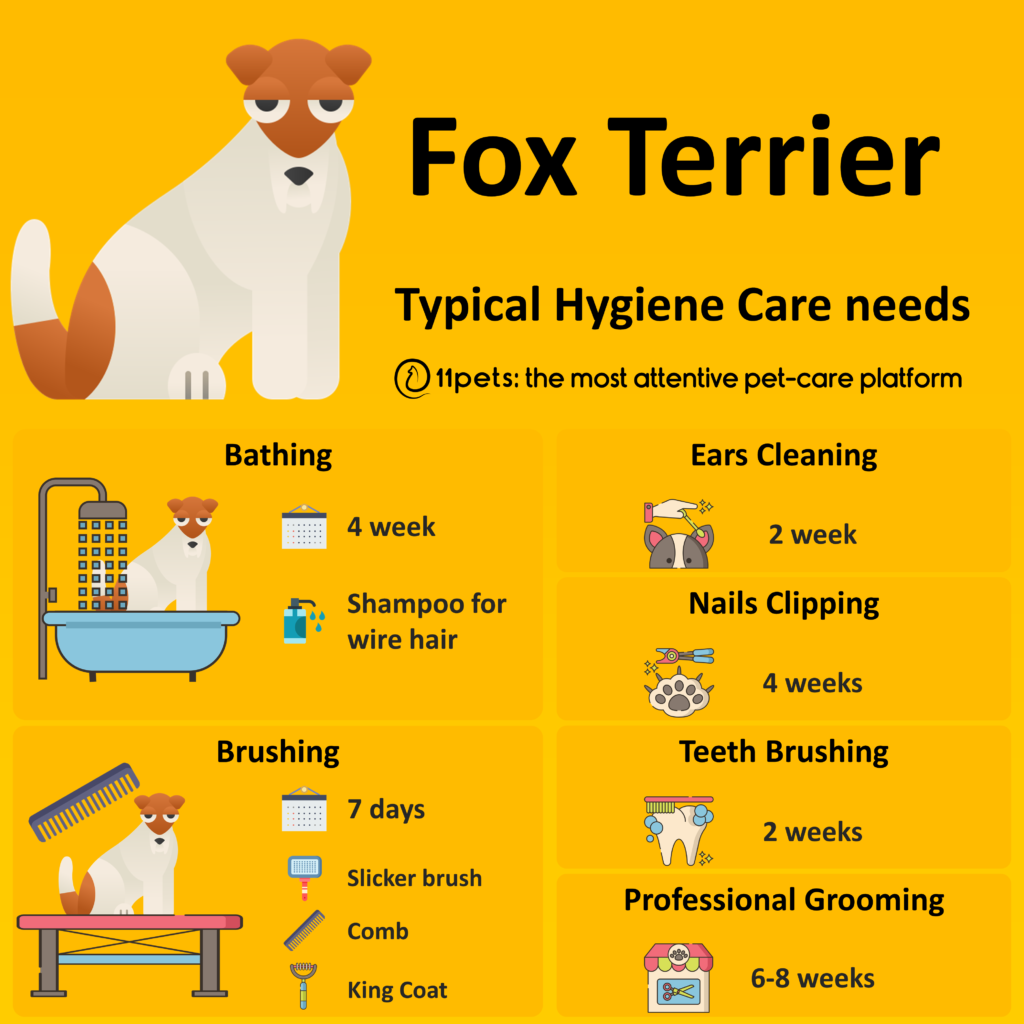Hygiene Care Guide for Fox Terrier