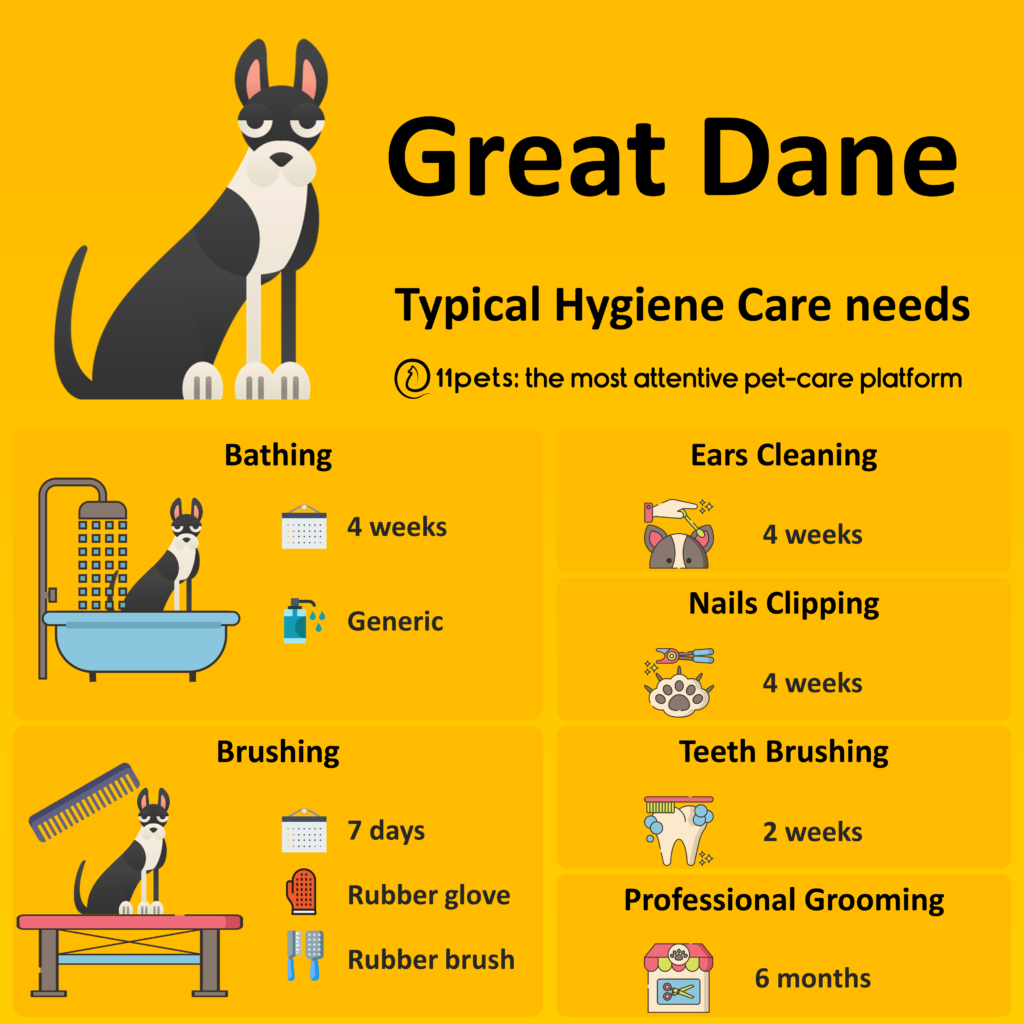 Hygiene Care Guide for Great Dane