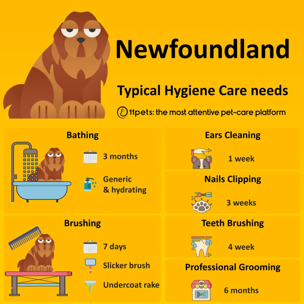 Hygiene Care Guide for Newfoundland