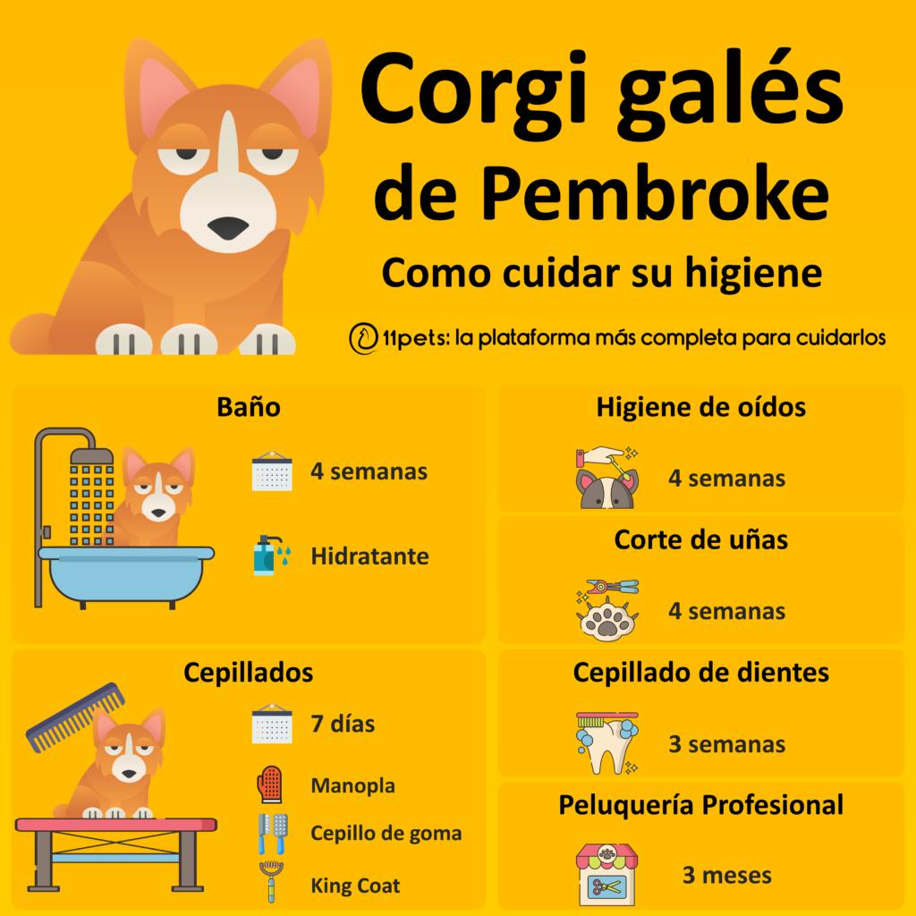 Guía de cuidados para la higiene de tu Corgi Galés de Pembroke