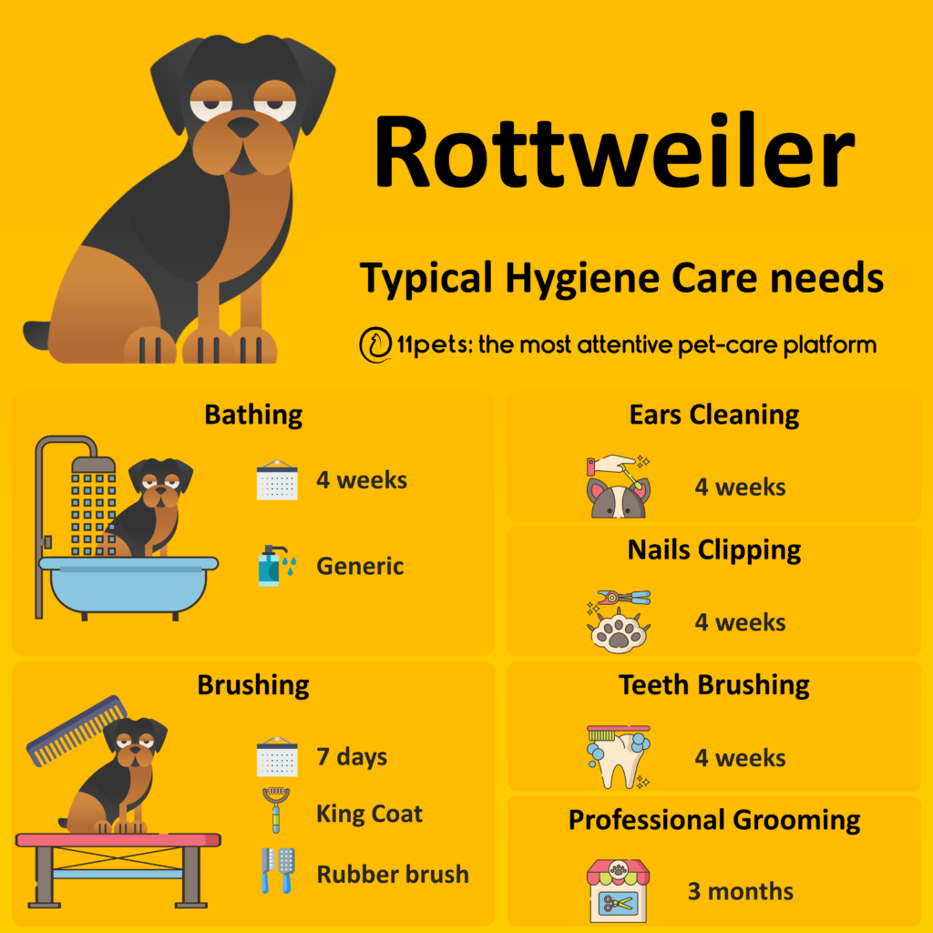 Hygiene Care Guide for Rottweiler