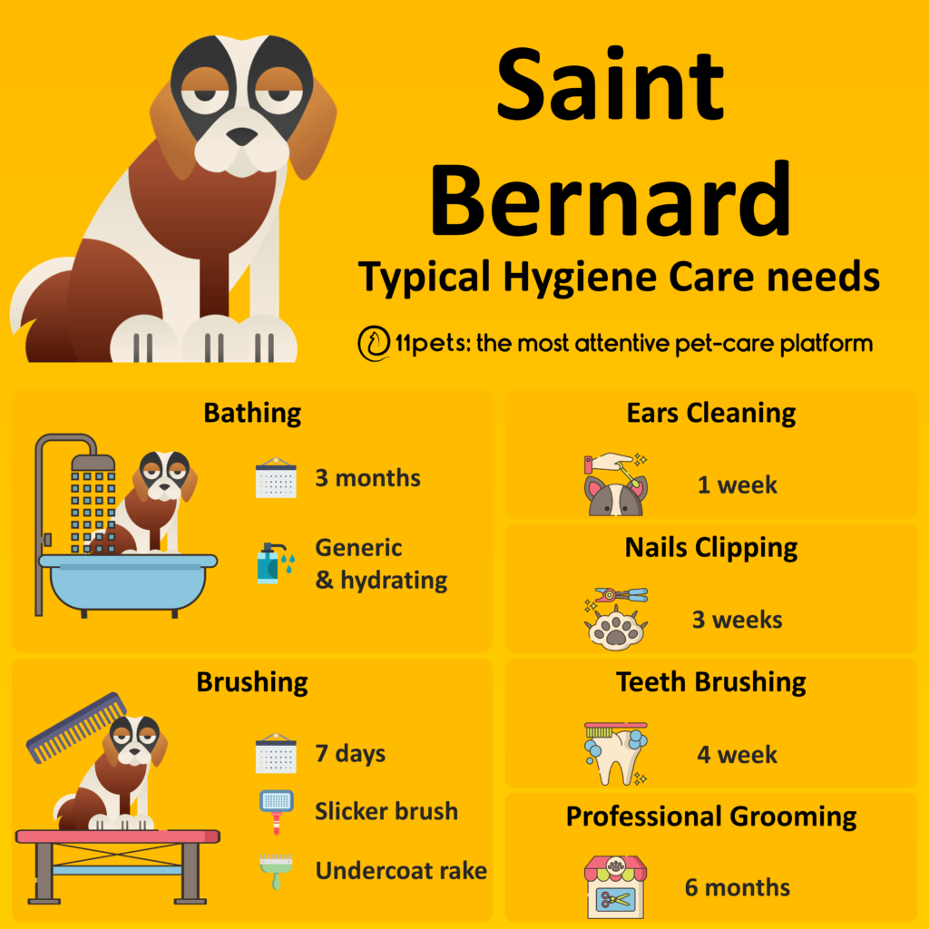 Hygiene Care Guide for Saint Bernard