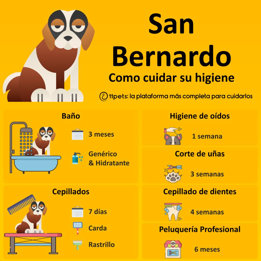 Guía de cuidados para la higiene de tu San Bernardo