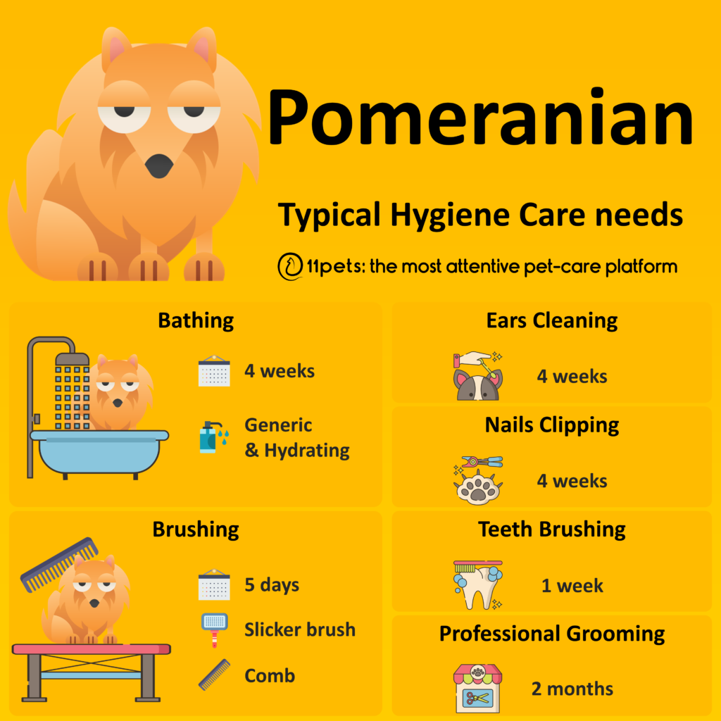 Hygiene Care Guide for Pomeranian