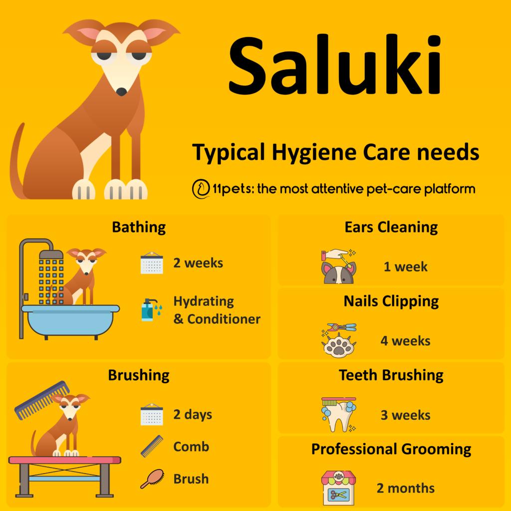 Hygiene Care Guide for Saluki