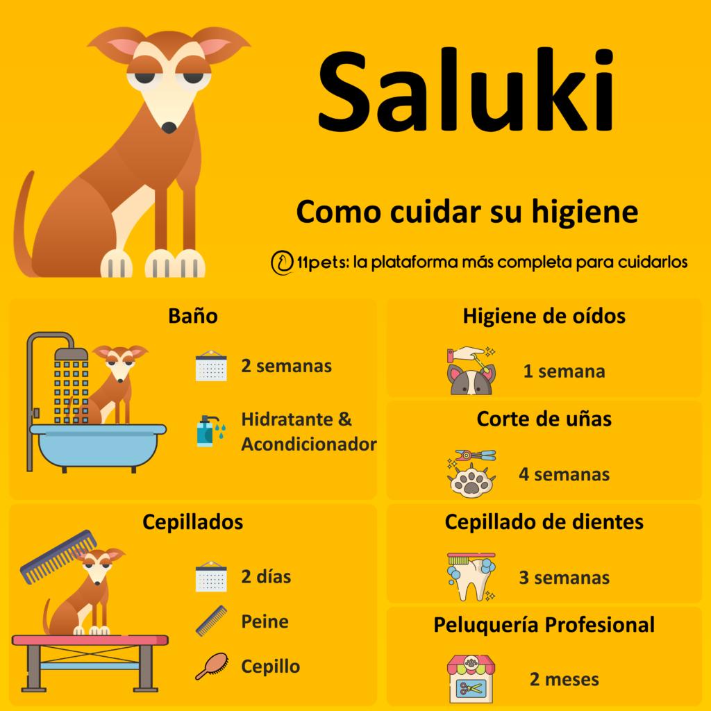 Guía de cuidados para la higiene de tu Saluki