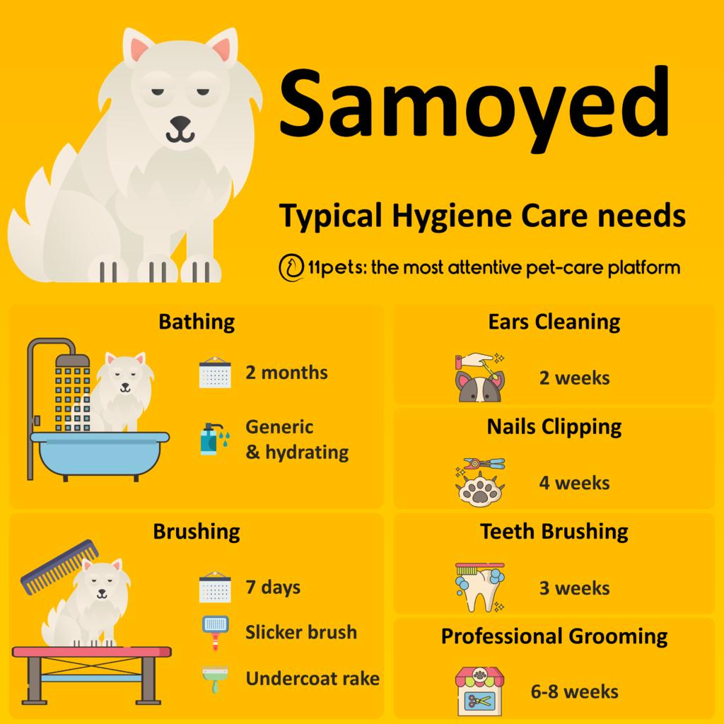 Hygiene Care Guide for Samoyed