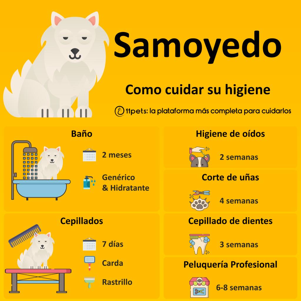 Guía de cuidados para la higiene de tu Samoyedo