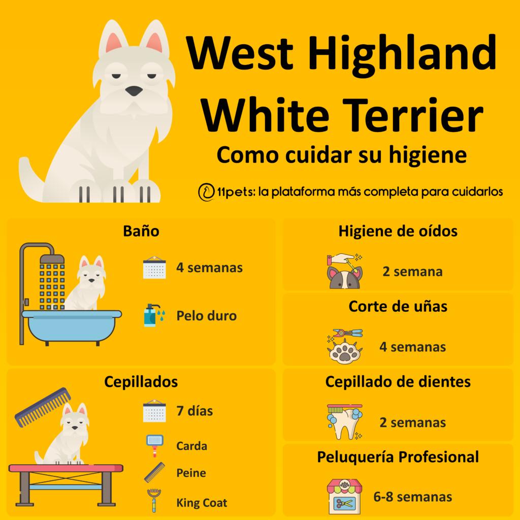 Guía de cuidados para la higiene de tu West Highland White Terrier