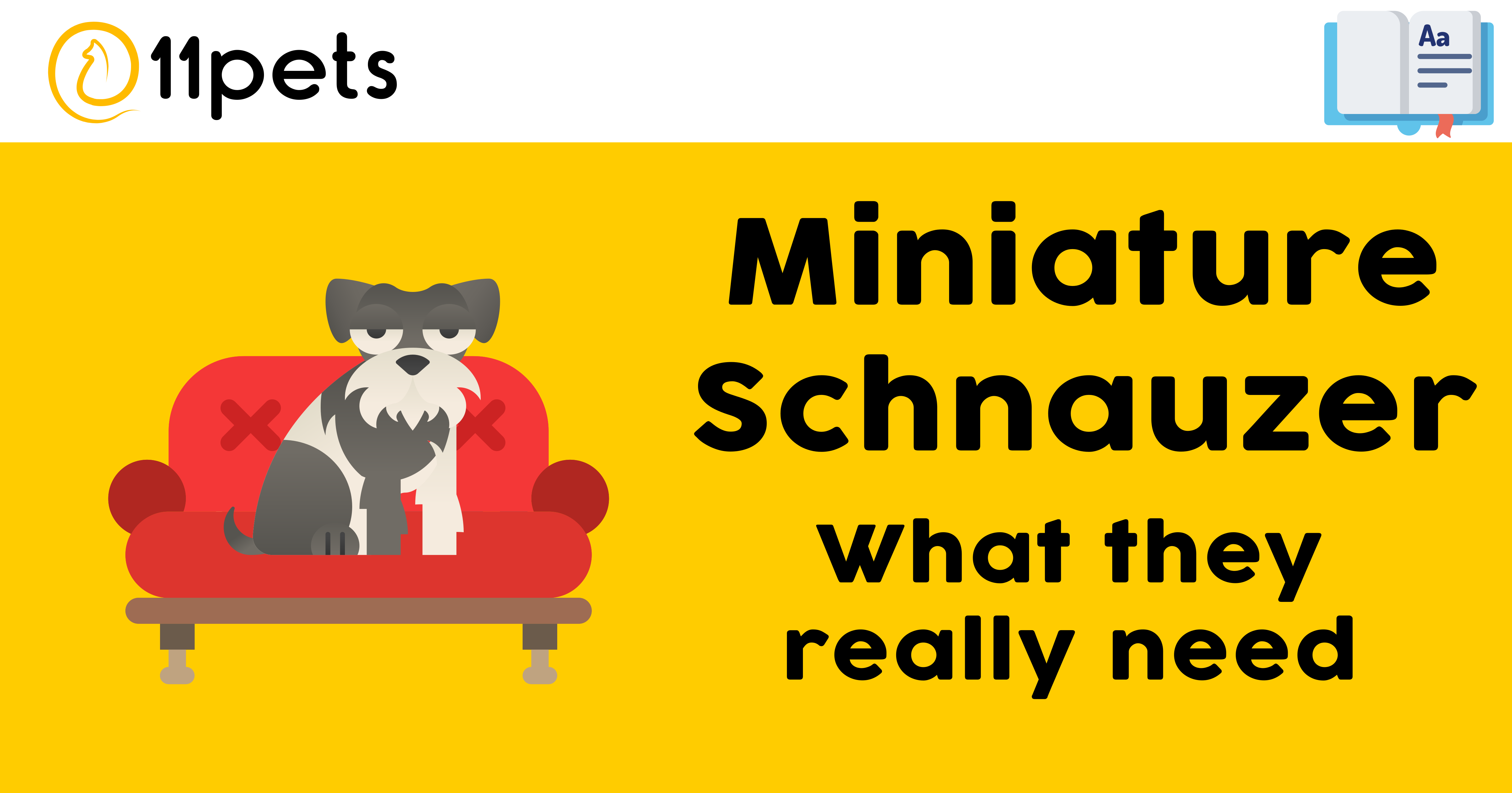 Miniature Schnauzer - What they really need