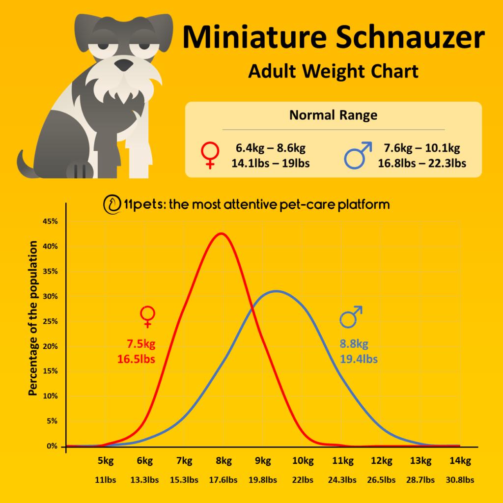 Miniature Schnauzer weight chart