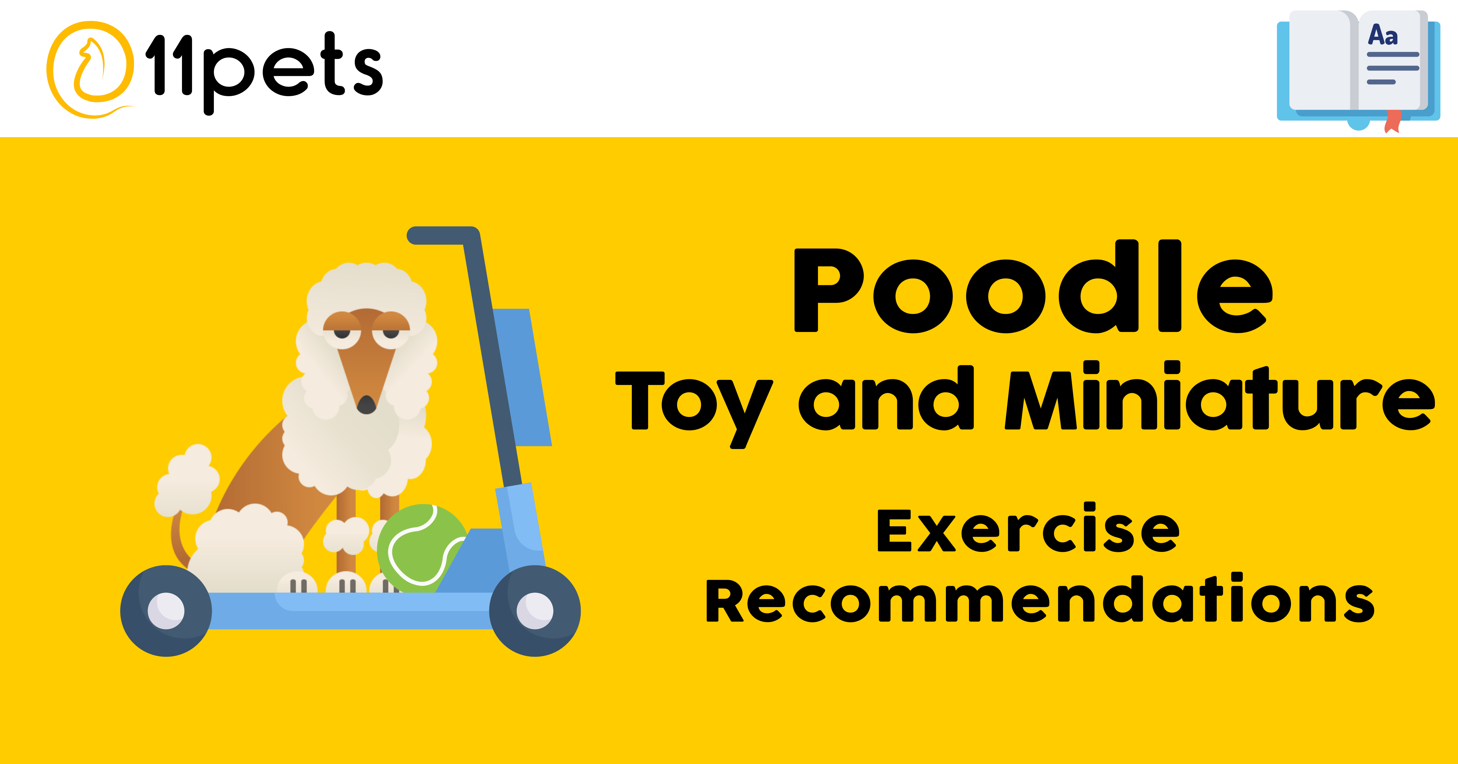 Poodle Toy and Miniature - Exercise Recommendations