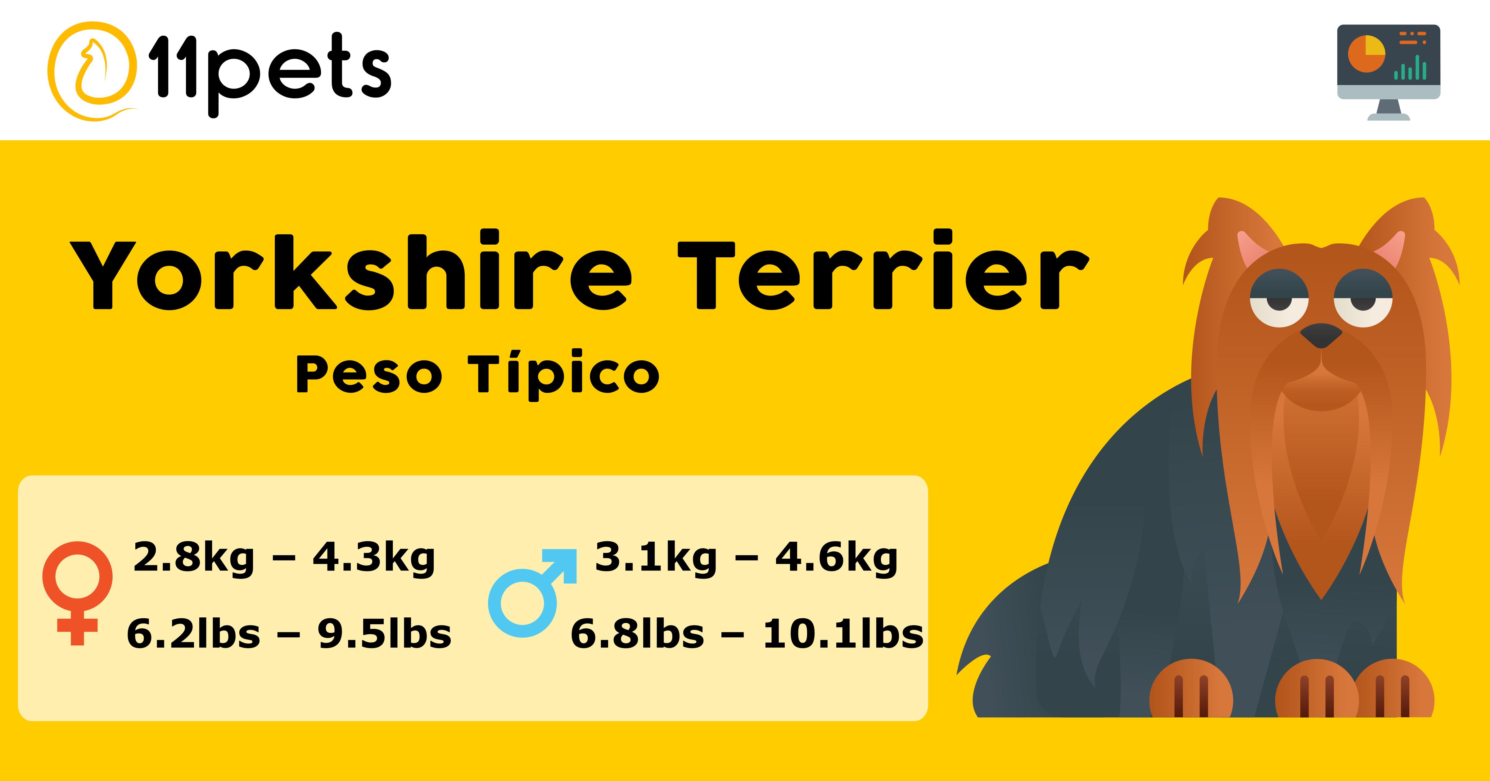 Peso Yorkshire Terrier