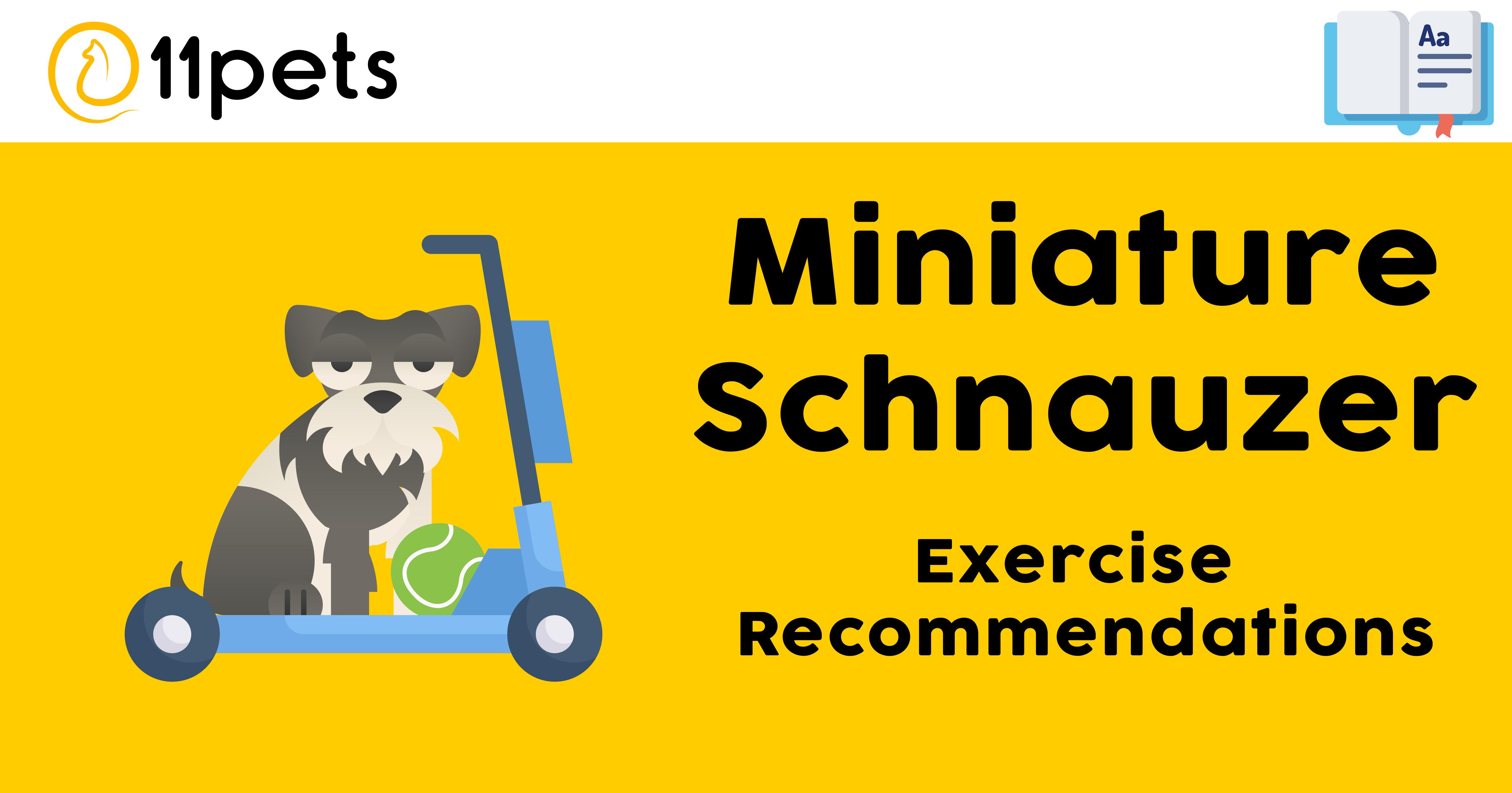 Miniature Schnauzer - Exercise Recommendations