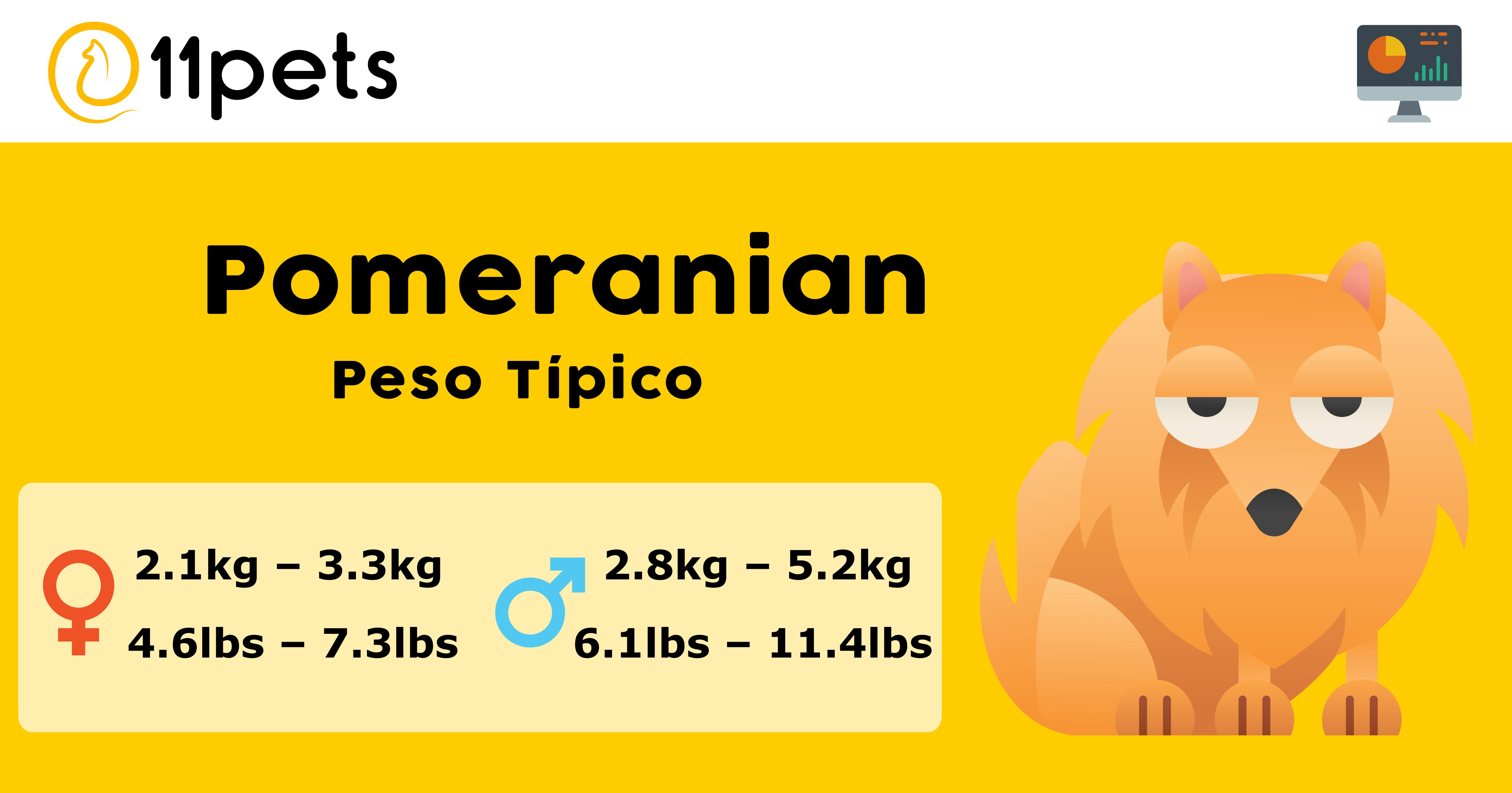 Peso Pomeranian