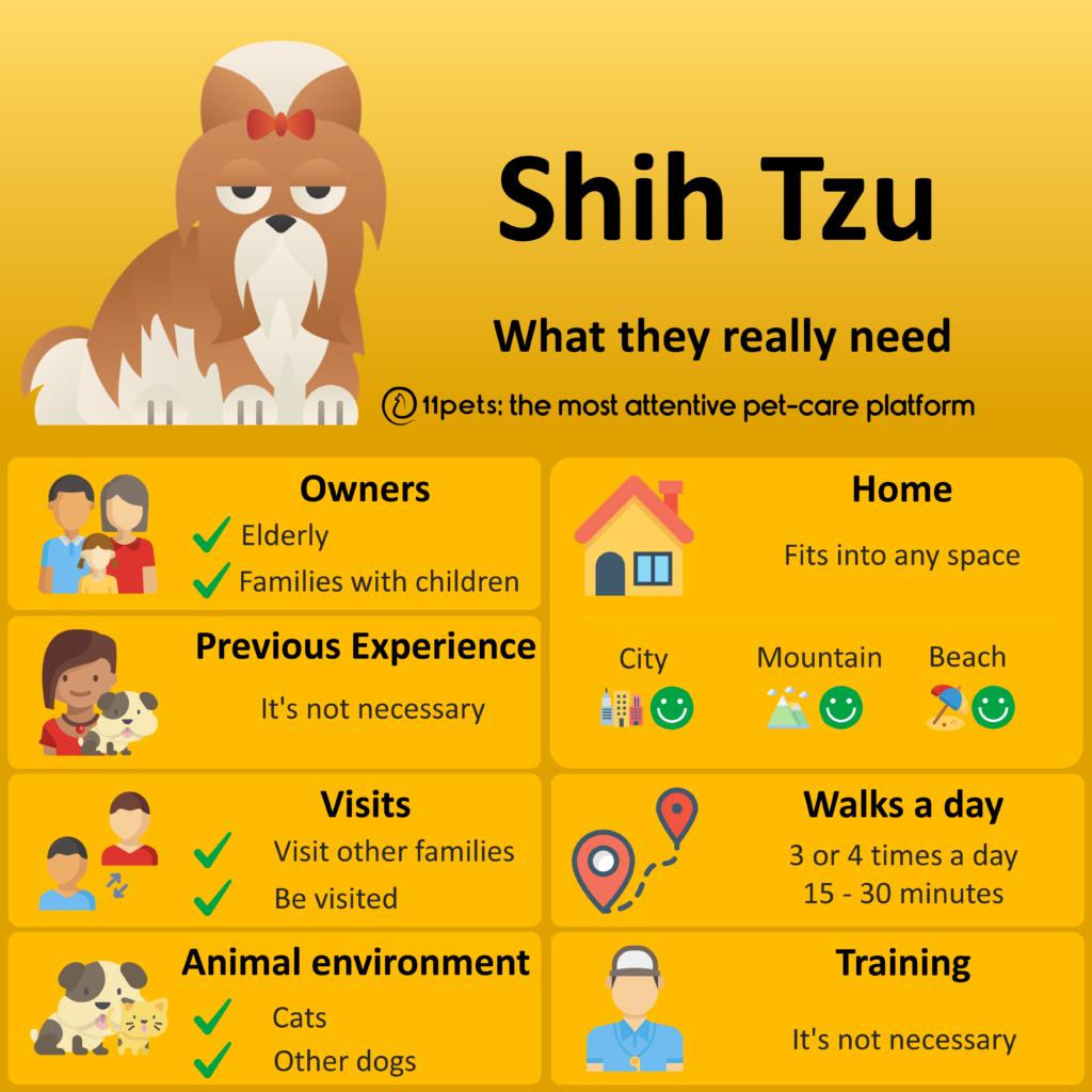 Shih Tzu- Los Cuidados que Necesitan
