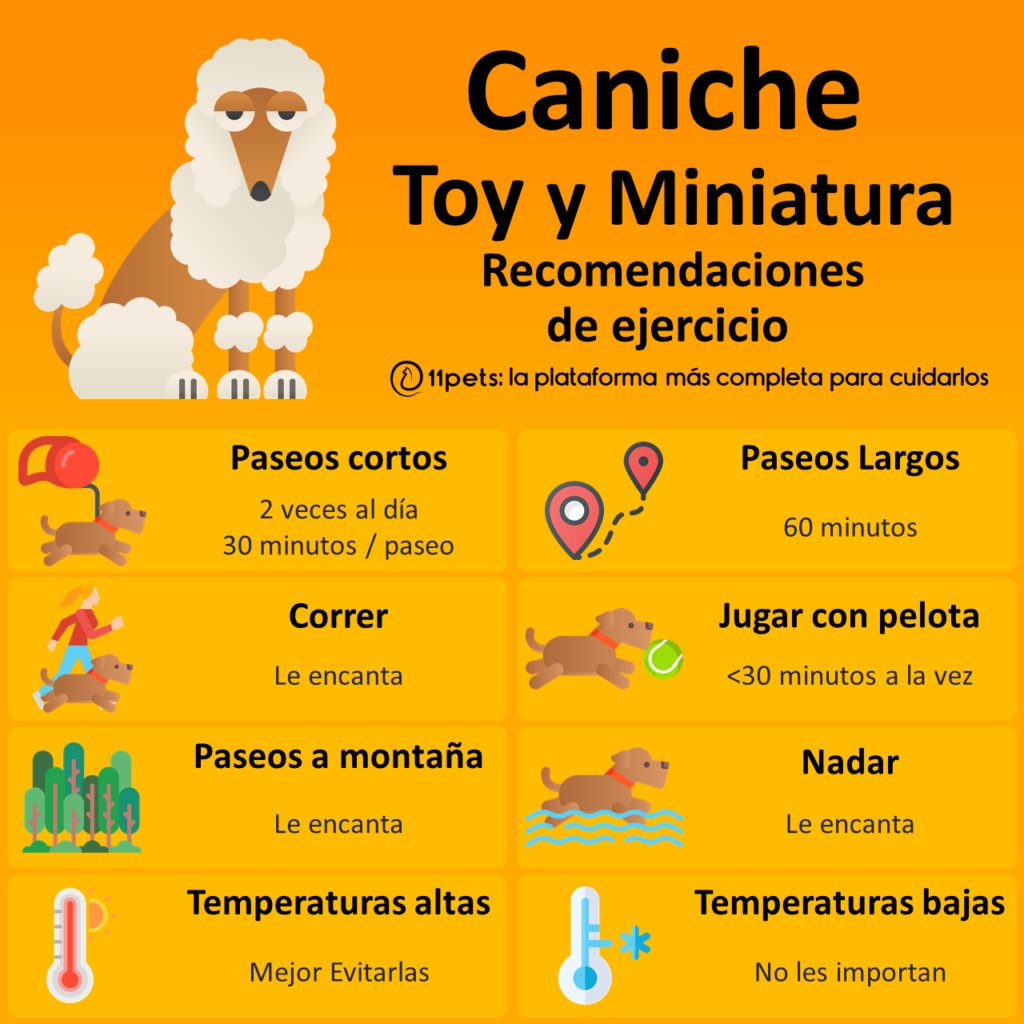 Caniche Toy y Enano - Recomendaciones de Ejercicio