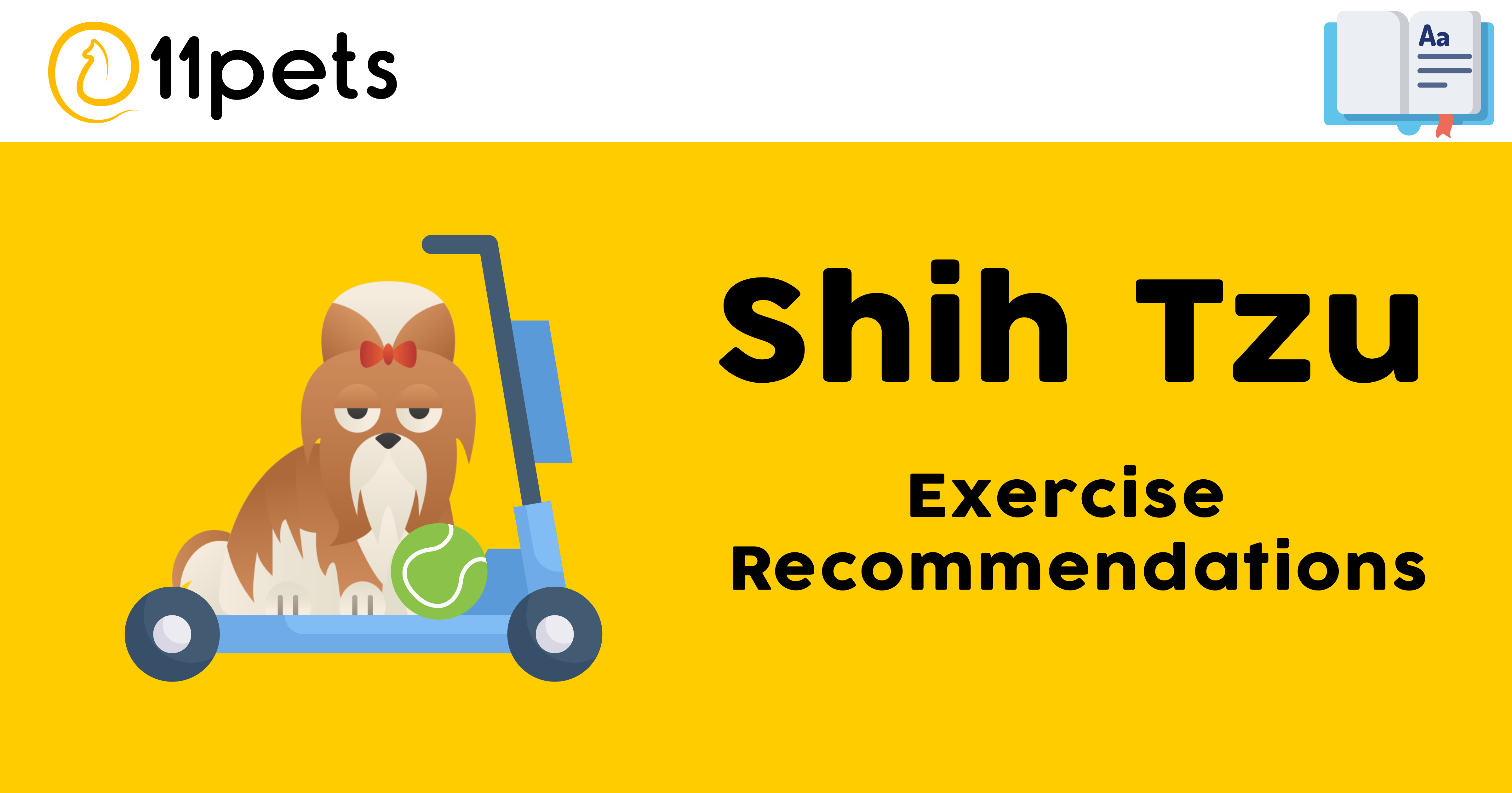 Shih Tzu - Exercise Recommendations