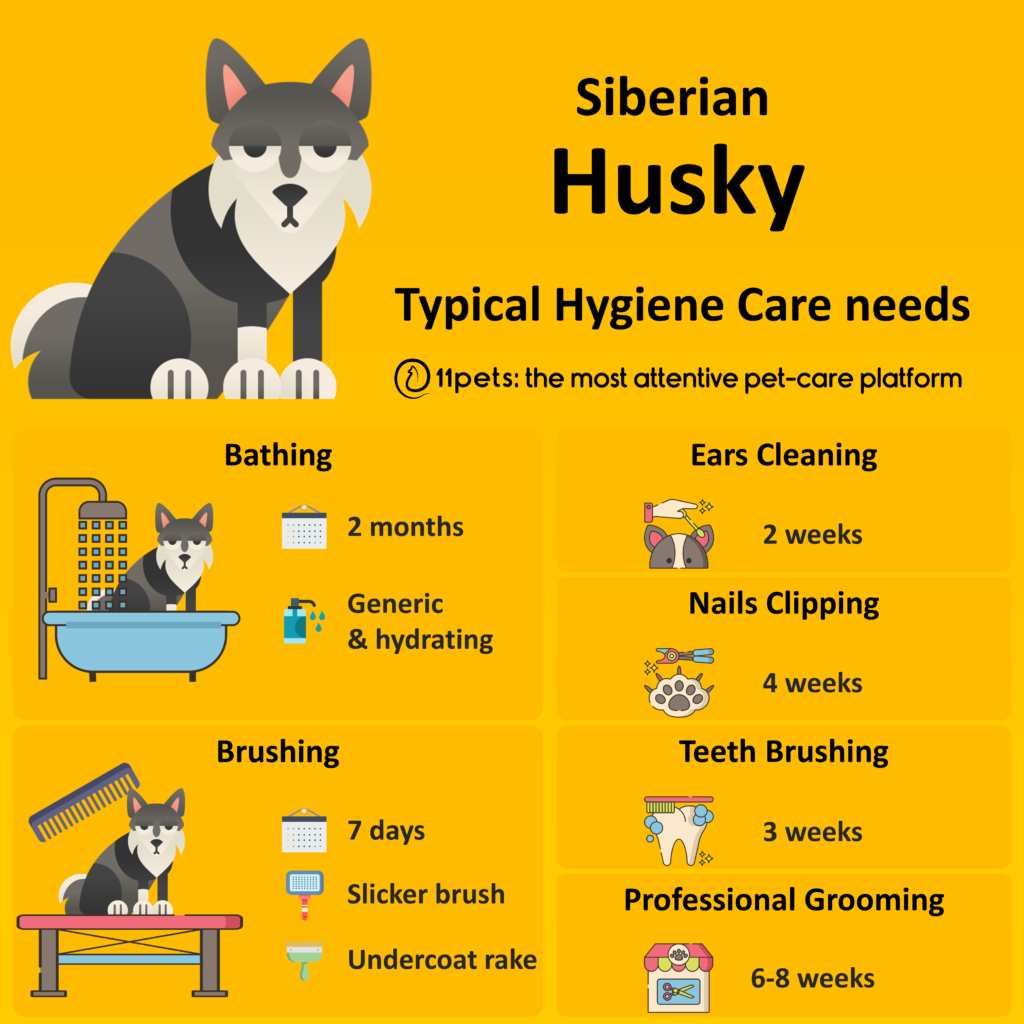 Hygiene Care Guide for Husky