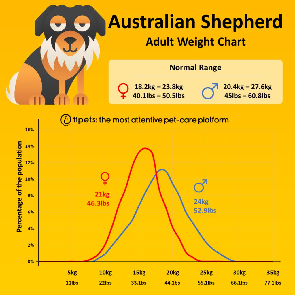 Australian Shepherd Weight