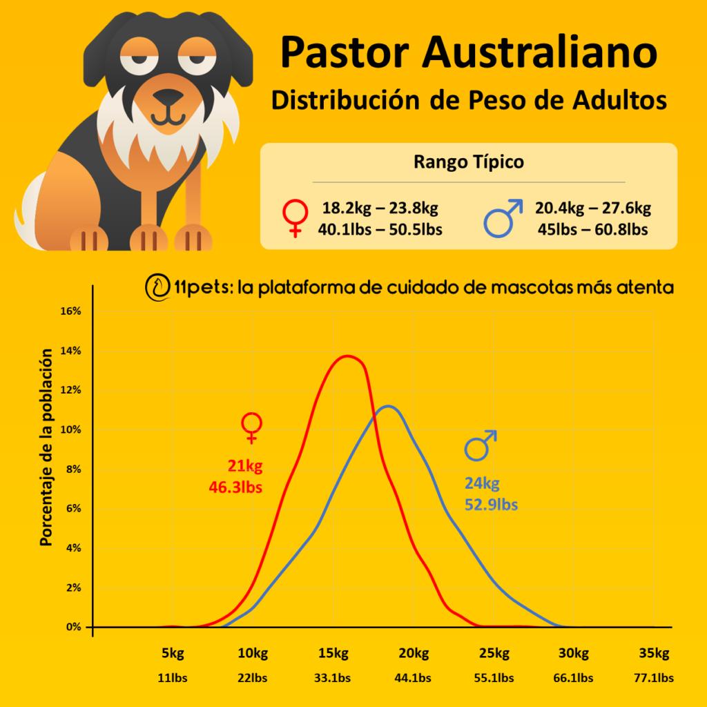 Peso Pastor Australiano