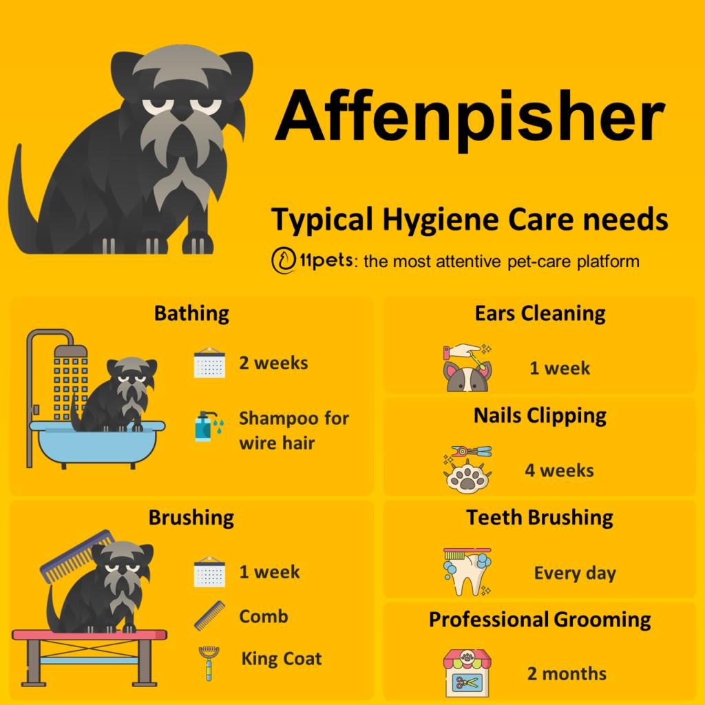 Affenpisher, higiene, care